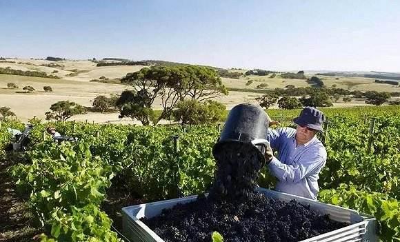 威龙花费巨资的澳洲米尔迪拉酒庄开始动工建设