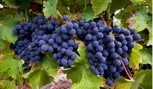 低价的葡萄酒就不能叫好的葡萄酒吗?你别被忽悠了