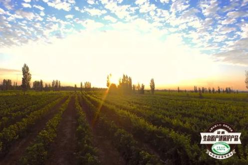 新疆天山北麓的玛纳斯:国内首个获小产区认证的葡萄酒产区