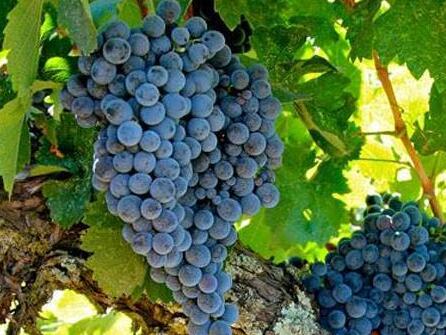 对于南非红酒,知道这7件事就够了