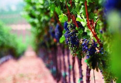 美国葡萄酒文化,他们都说这5点最鲜明