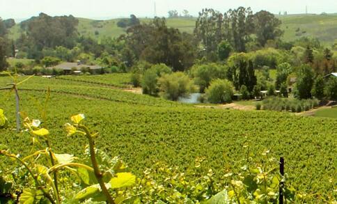 卡内罗斯集团(Carneros Wine Company)