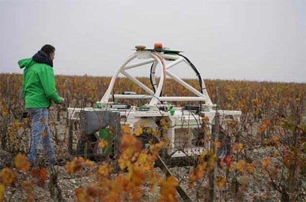 克拉米伦酒庄使用机器人在葡萄园里育土和除草