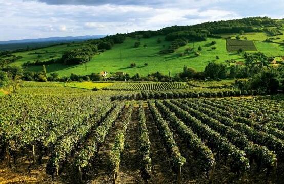 法国比泽(Buzet)产区