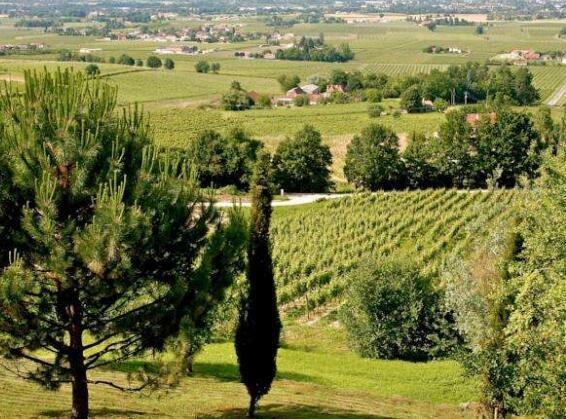 法国蒙巴兹雅克(Monbazillac)产区