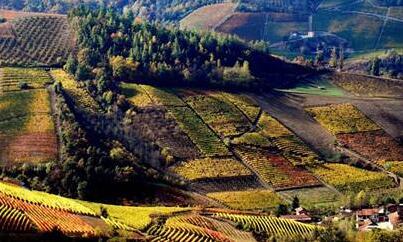 意大利巴巴萊斯科(Barbaresco)產區:皮埃蒙特地區的重要產區