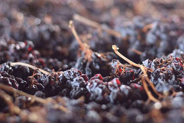 意大利阿瑪羅尼瓦坡里切拉產區:最負盛名的意大利釀酒區之一