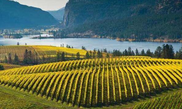 加拿大安大略(Ontario)产区:盛产冰酒的地区