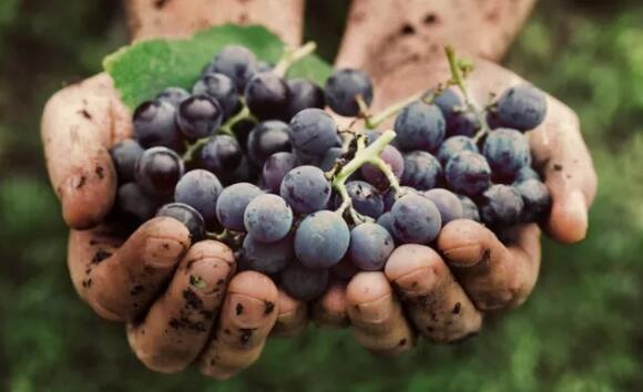 西班牙红酒历史,产区和知名品种介绍