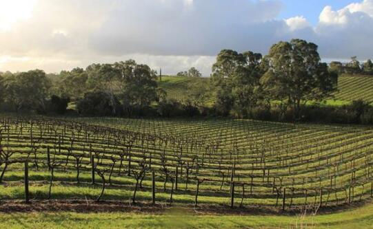 英国10个有魅力的葡萄酒庄园