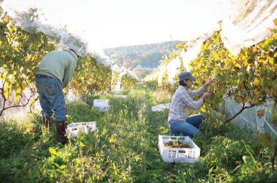 窖门酒庄(Cellardoor Winery)