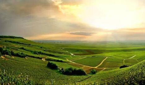 白垩山酒庄(Chalk Hill Winery)