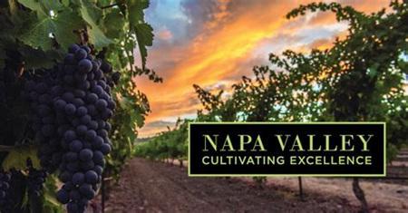 作品一号酒庄CEO将出任纳帕谷葡萄酒协会主席