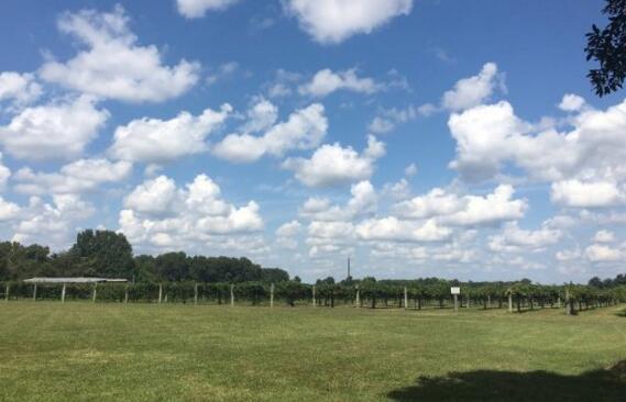 世纪农场酒庄(Century Farm Winery)