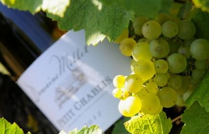 米乐特酒庄(Domaine Millet)