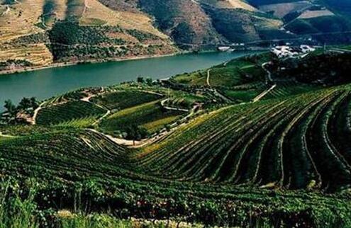 葡萄牙红酒入门篇
