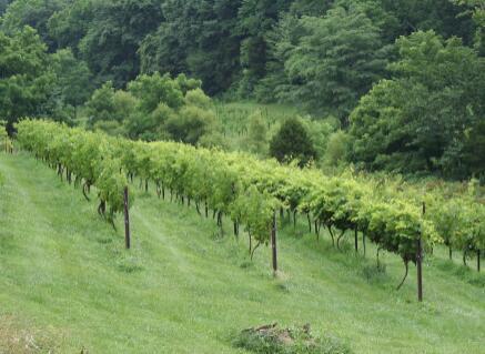 帕格斯溪酒庄(Pages Creek Wines)