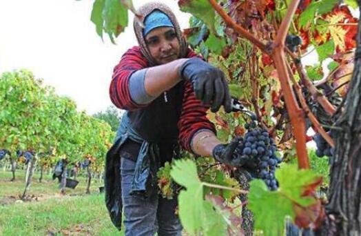 葡萄酒的做法过程详解