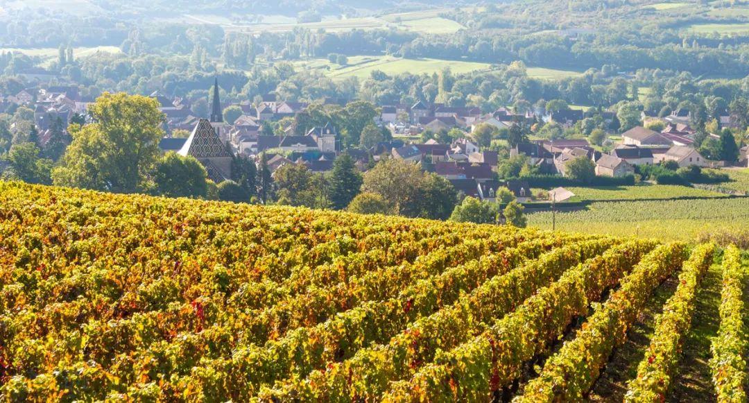 那些被列入世界遗产名录的葡萄酒产区