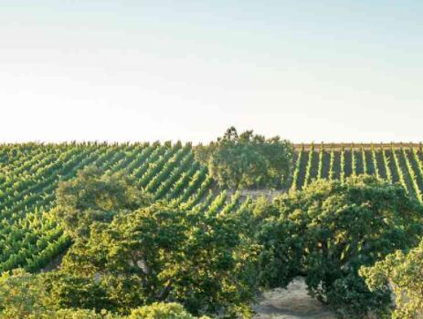 盖尼酒庄(Gainey Vineyards)