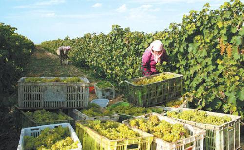 国家葡萄产业研究院项目洽谈会议于日前举办