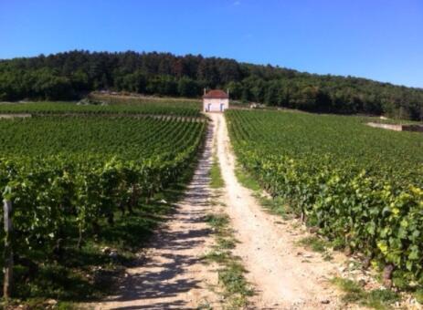 瓦罗耶酒庄(Domaine des Varoilles)