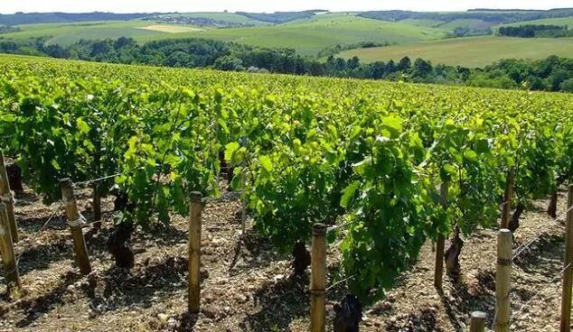 读懂以下六个市场信息,才能提高葡萄酒销售量!