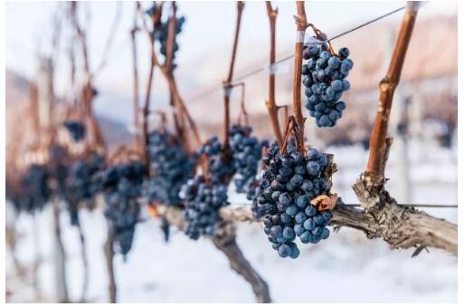 中国葡萄酒之最 中国葡萄产区三大之最