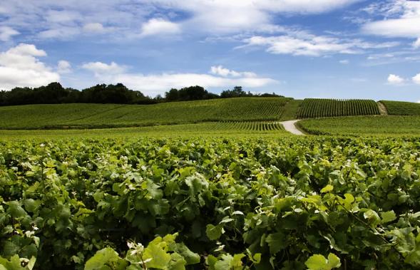 2017年世界葡萄和葡萄酒生产及流通报告新鲜出炉