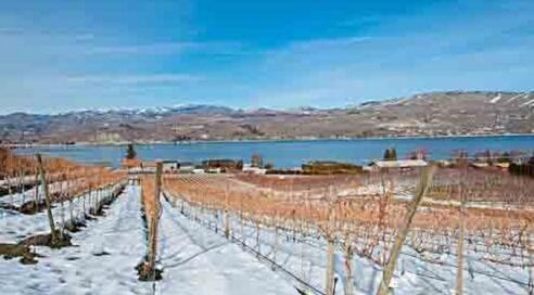 全国人大代表表示黑龙江应该大力发展冰葡萄产业