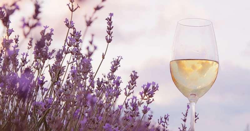 有葡萄美酒相伴,春意才会更浓