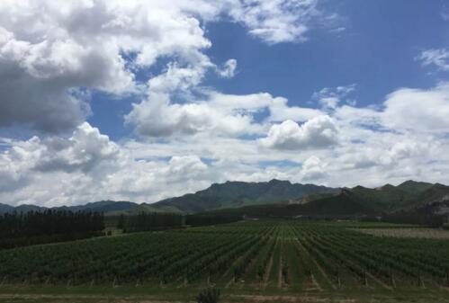 2017年中国葡萄酒产区报告(上)新鲜出炉