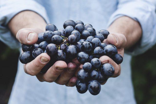 葡萄酒大师Emma Dawson启动一个线上项目