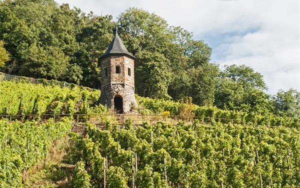 葡萄酒380亿上升的空间谁主沉浮?中国葡萄酒新黄金十年已经来临!