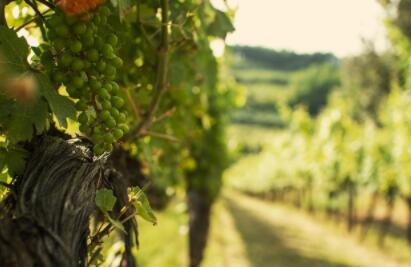 伯德诺酒庄——意大利托斯卡纳产区著名酒庄之一