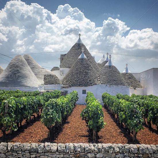 普利亚:特色葡萄品种正流行