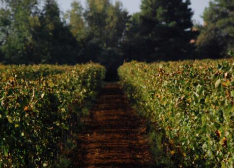百合酒庄——意大利有机葡萄酒庄