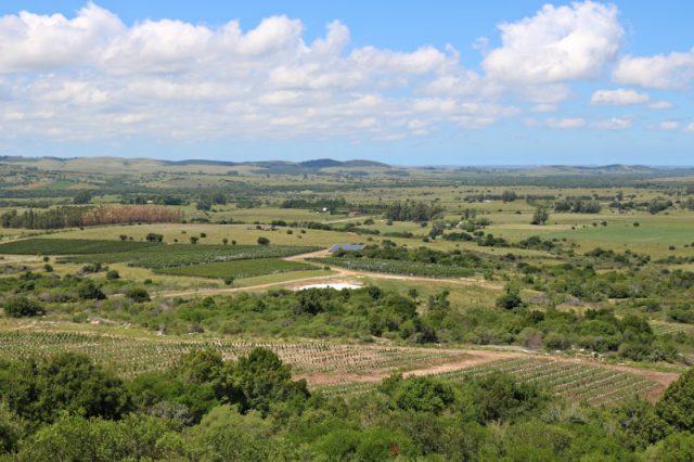 9名葡萄酒大师受邀前往乌拉圭,考察当地葡萄酒产区