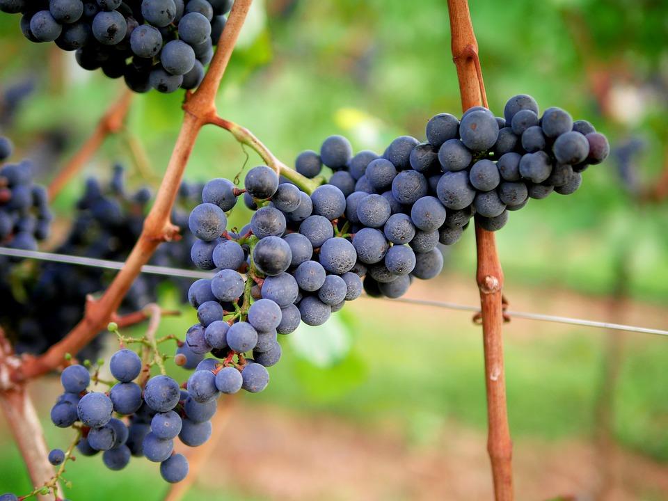 酒标中的酒精度和葡萄品种,竟可决定酒的酸甜苦辣!