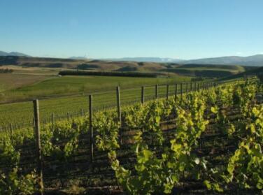 泰雷斯酒庄(Tarras Vineyards):新西兰有机葡萄酒庄