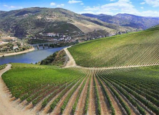 西班牙十大葡萄酒产区,旅游首选