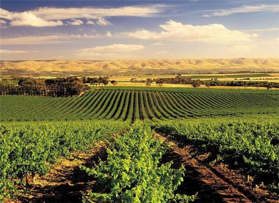 波尔多vs勃艮第,两大红酒产地差异