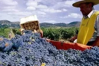 2017年南美多国葡萄减产,葡萄酒将迎来涨价潮