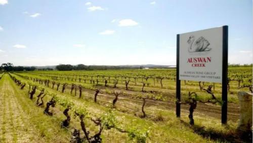 李卫:中国葡萄酒市场已经进入品牌化时代