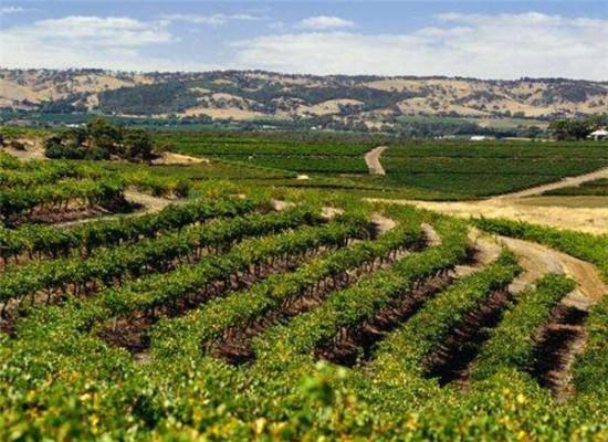 这八大葡萄酒产区是未来的新星