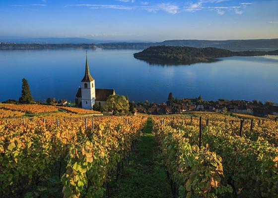 葡萄酒在美洲的生命成长历程 你了解吗?