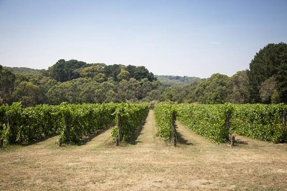 桃金娘科酒庄(Myrtaceae Winery)