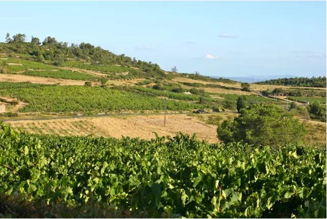 北京Interwine活动预告!  法国朗格多克法定产区葡萄酒推广大使柳森带您走进朗格多克的著名法定产区