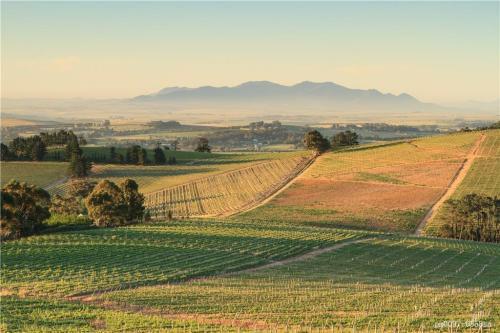 南非葡萄酒的文化是怎样的?