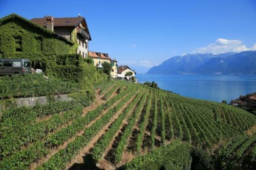 瑞士葡萄酒文化是怎样的?